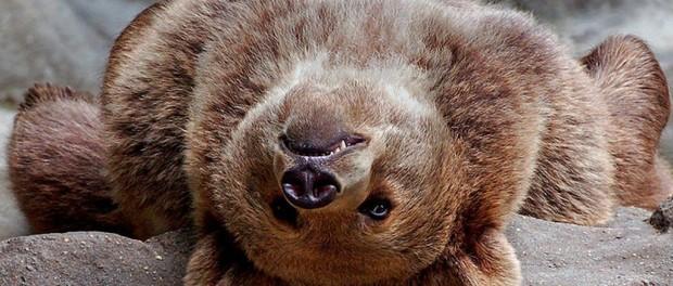 ТОП-10 самых позитивных животных