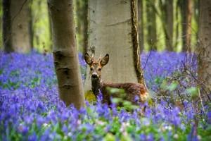 Синий лес4