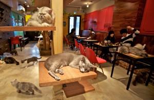 CatCafe06