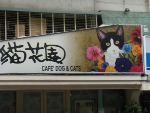 cat-cafe-001