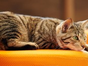 CAT-CAFE2
