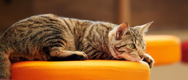 Позитив от животных – американцам прописали котят в качестве стрессотерапии