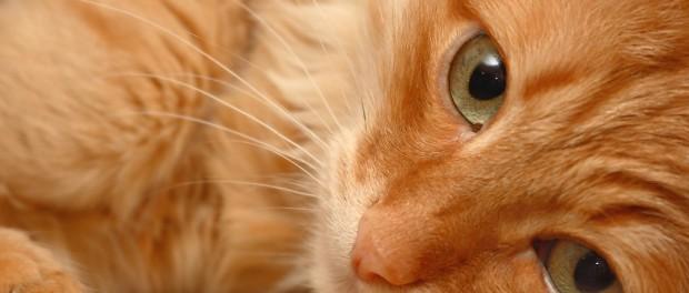 Российское общество взбудоражил  приморский «кот-гурман»