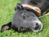 самый-неудачный-пес