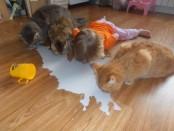 Позитивное питье молока