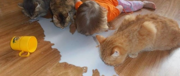 Молоко, дети, кошки и немного позитива