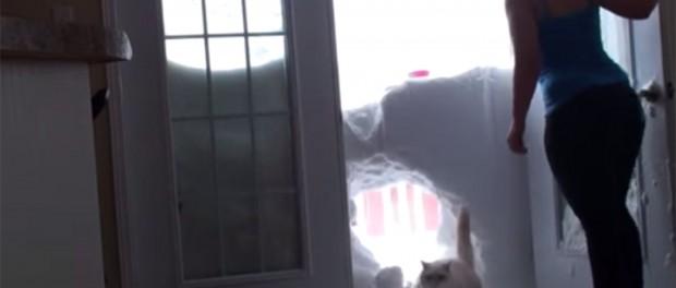 Позитивное видео про кота и снег