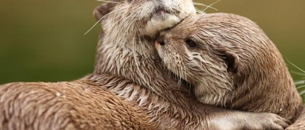Видео настоящей дружбы между животными