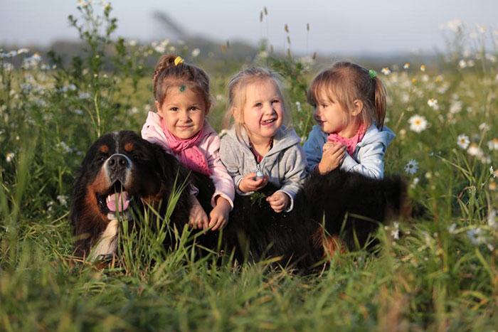рупная порода швейцарских собак Зенненхунд