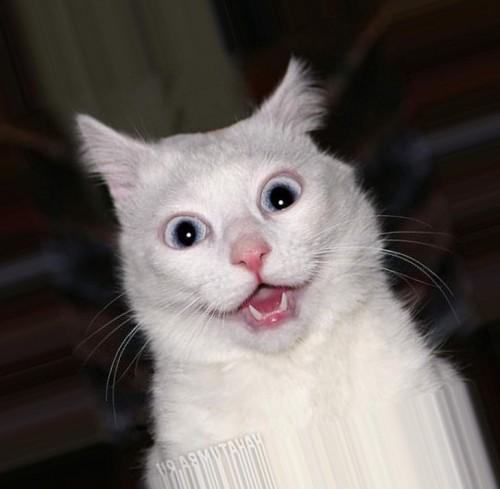 картинка удивленного кота