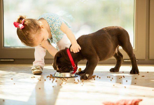 Воспитание ребенком собаки