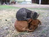 Необычная дружба животных на фото