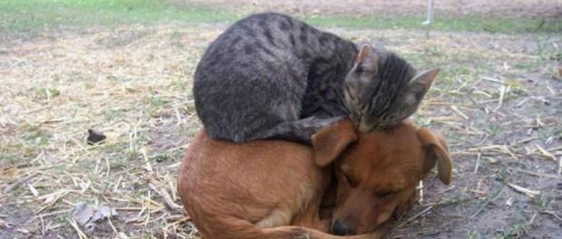 Дружба и взаимовыручка в животном мире