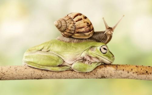 Позитивные-фото-Улитка на жабе