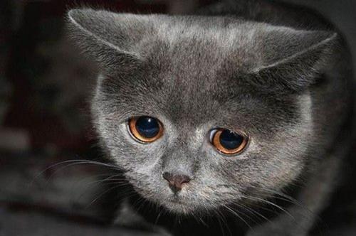 Грусть и печаль в глазах кота