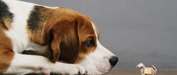 Улицы Лондона заполонили 10-фунтовые собачки