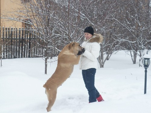 Крупная порода собак - Бурбуль