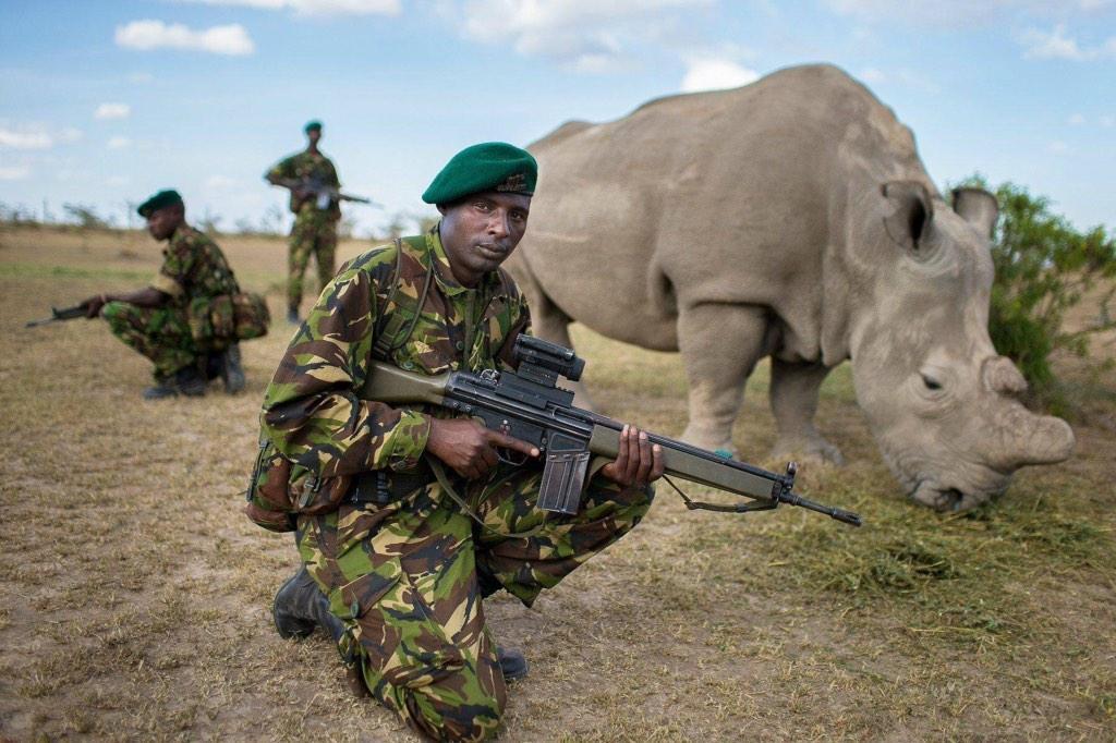 Охрана белых носорогов