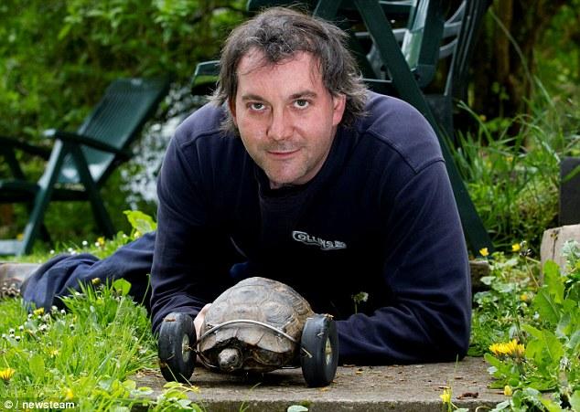 Новая жизнь неудачливой черепахи