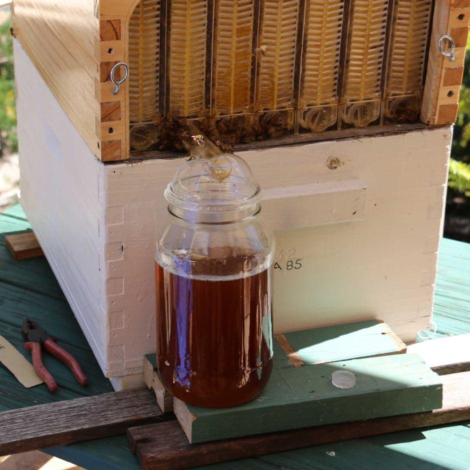 Собрать мед станет намного легче