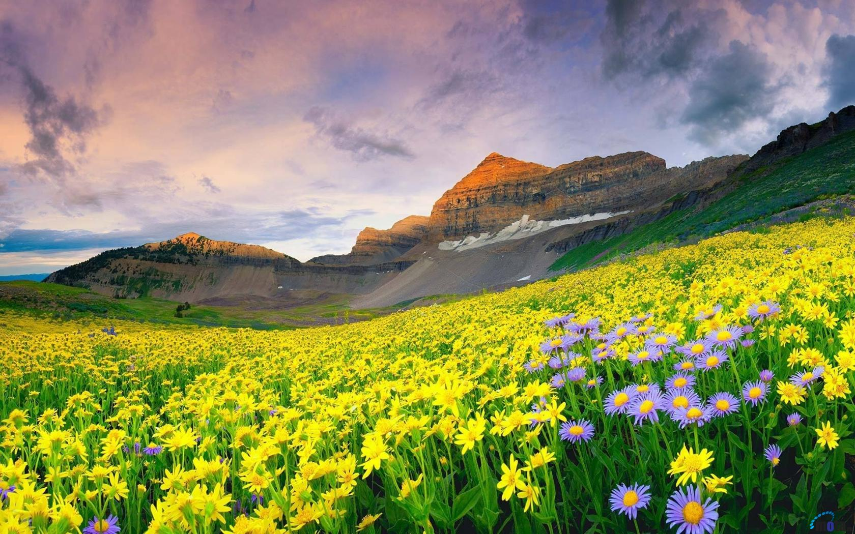 Интересное_место_Valley_of_flowers_06