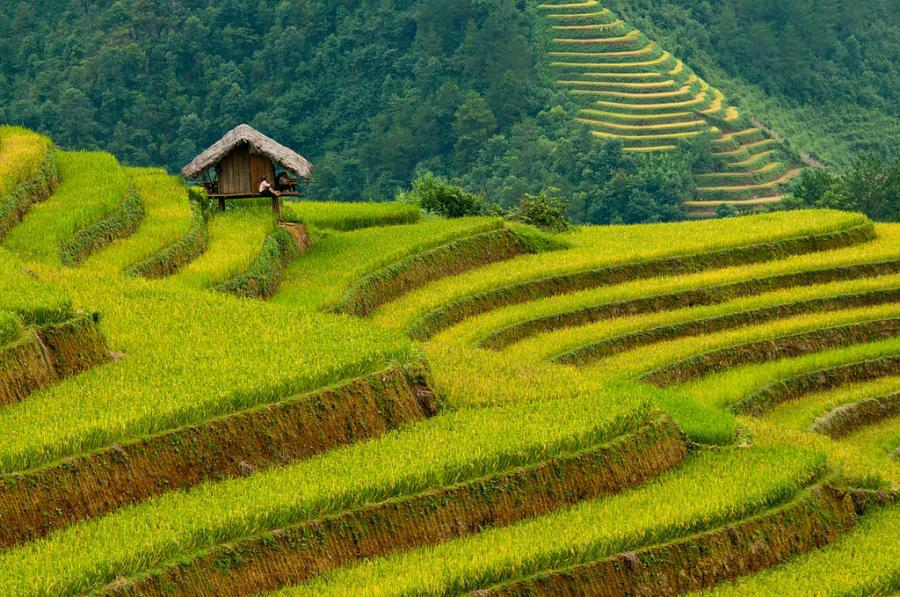 Интересное_место_banaue-rice-terraces02
