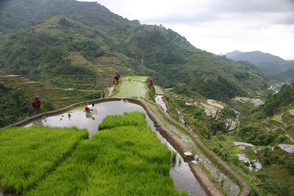 Интересное_место_banaue-rice-terraces06