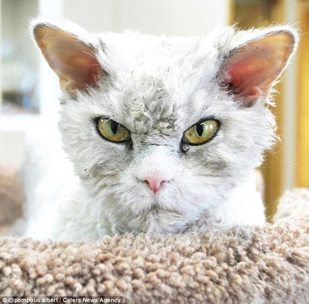 Новый герой семейства кошачьих