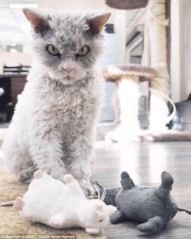 Серьезный конкурент сердитого котика