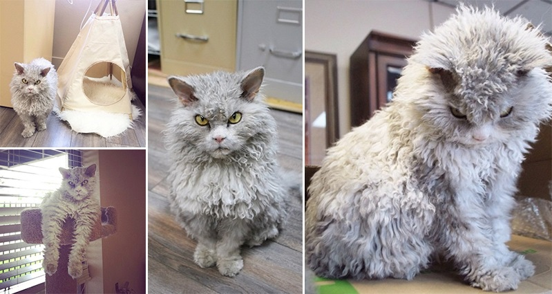 Сердитый-кот-Энштейн04