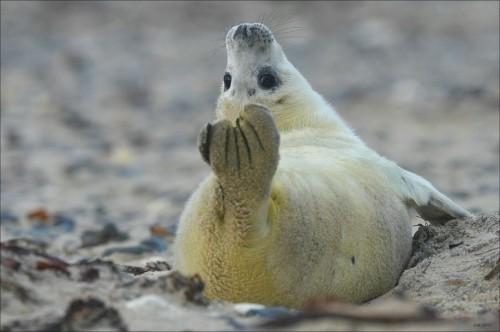 восхитительная йога - тюлень