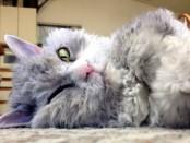Новый кот герой Инстаграм