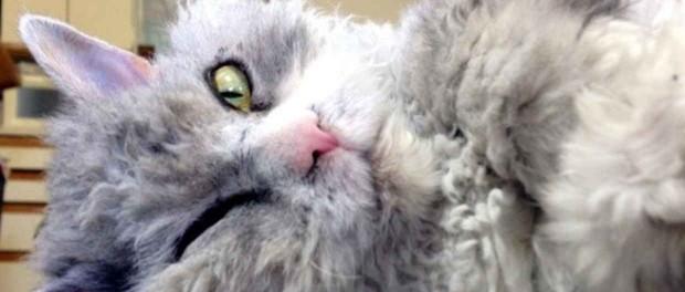 Новый герой интернета — напыщенный кот Эйнштейн