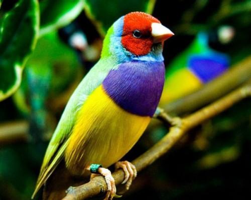 Позитивная и яркая птица