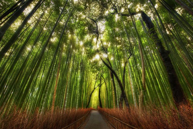 Живописная аллея бамбукового леса Сагано