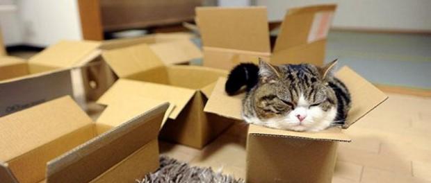 Самые популярные коты Ютуба