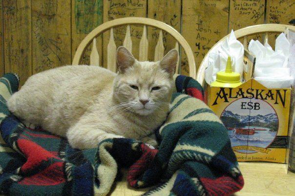 кот - мэр города на Аляске