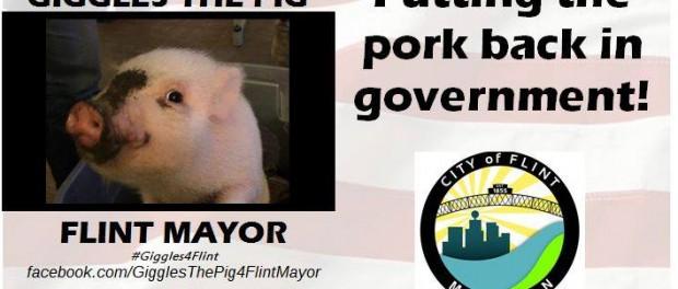 Американский городок может возглавить свинья