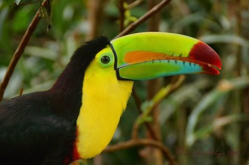 Радующая глаз позитивная птица Тукан