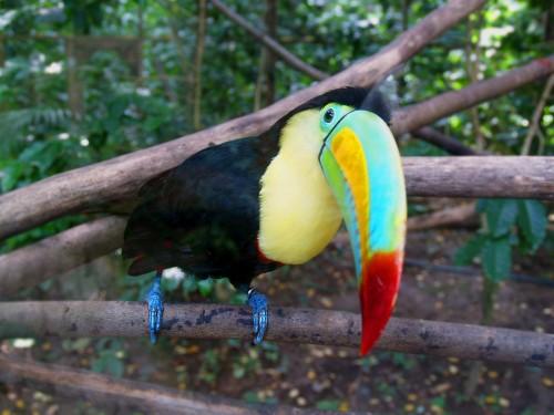 позитивная птичка с ярким клювом