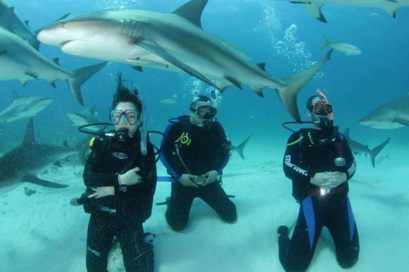 Дайвинг на багамских островах