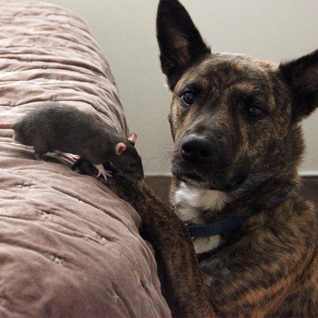 удивительный мир животных - необычная дружба