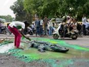 Крокодил отремонтирвал дорогу