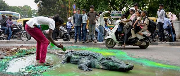 На борьбу с дорожными ямами в Индии подняли крокодилов