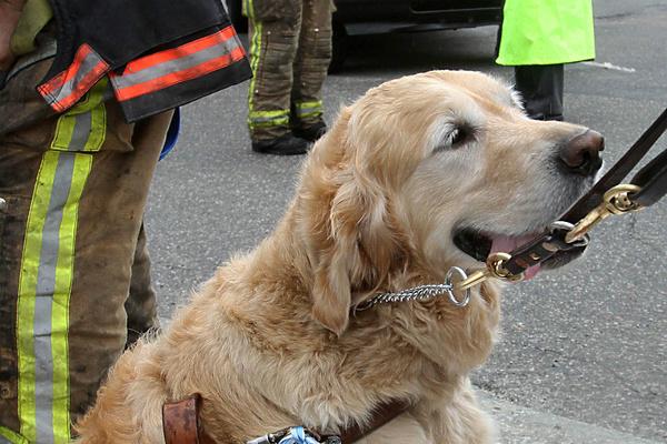 пес спас хозяйку
