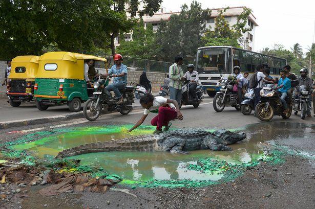 крокодил на дороге в Индии