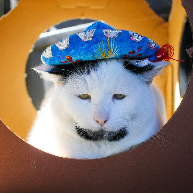 новый кот герой интернета