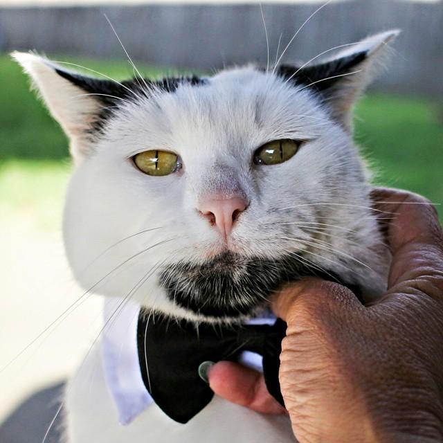 Позитивный кот-хипстер