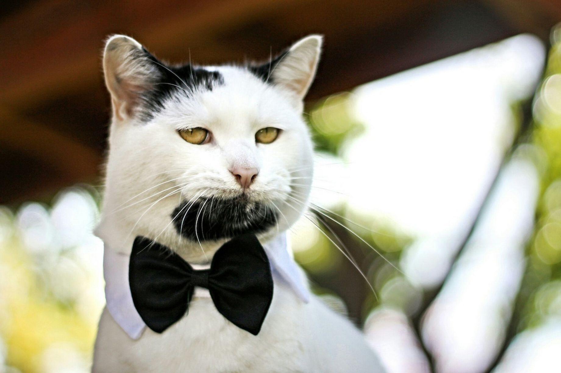 Кот-хипстер герой интернет