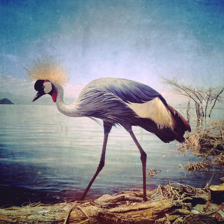 SephiBergerson03-animals1
